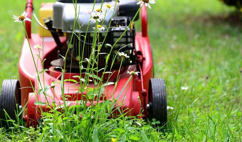 Réussir la tonte d'une pelouse trop haute