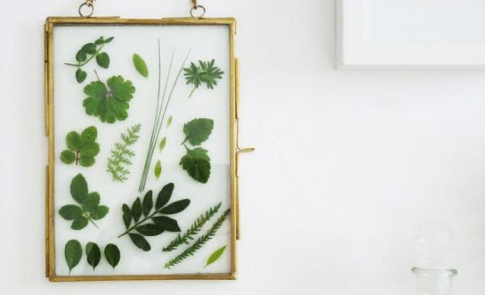 Cadre pour herbier